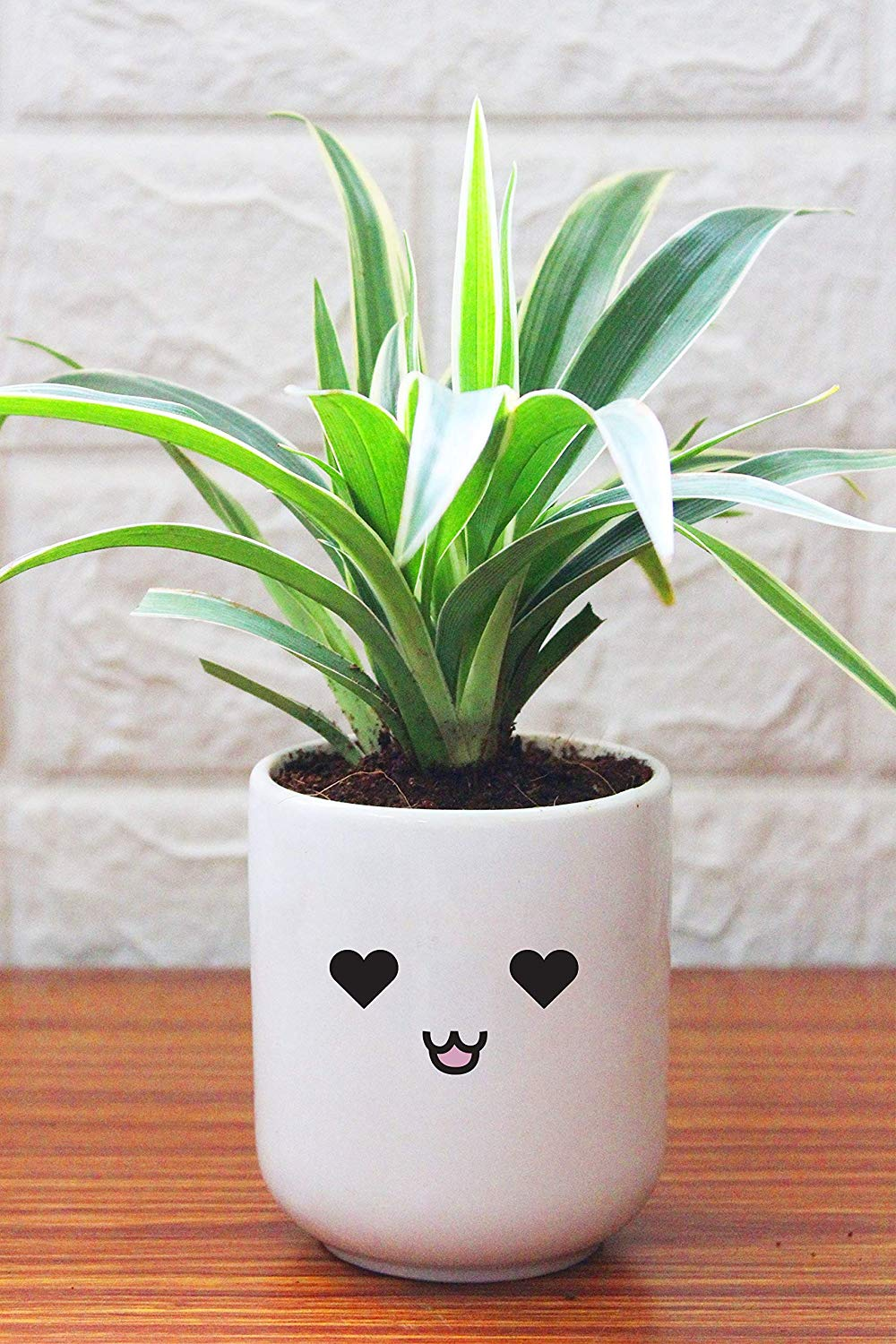 Air Purifying Spider Plant In Love Emoji White Ceramic Pot