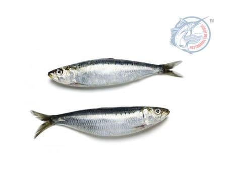 Sardine Mathi Sea Fish Pattammal Sea Food Chindatripet