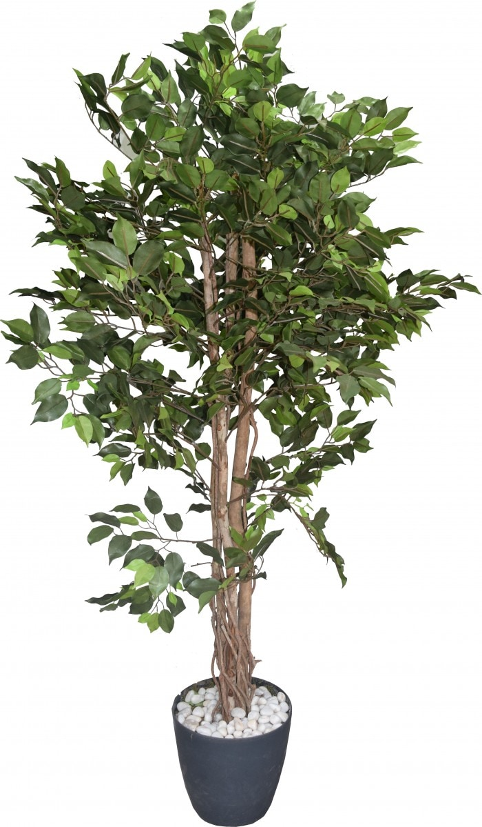ARTIFICIAL FICUS PLANT WITHOUT POT (GREEN 170 CM TALL) WP54