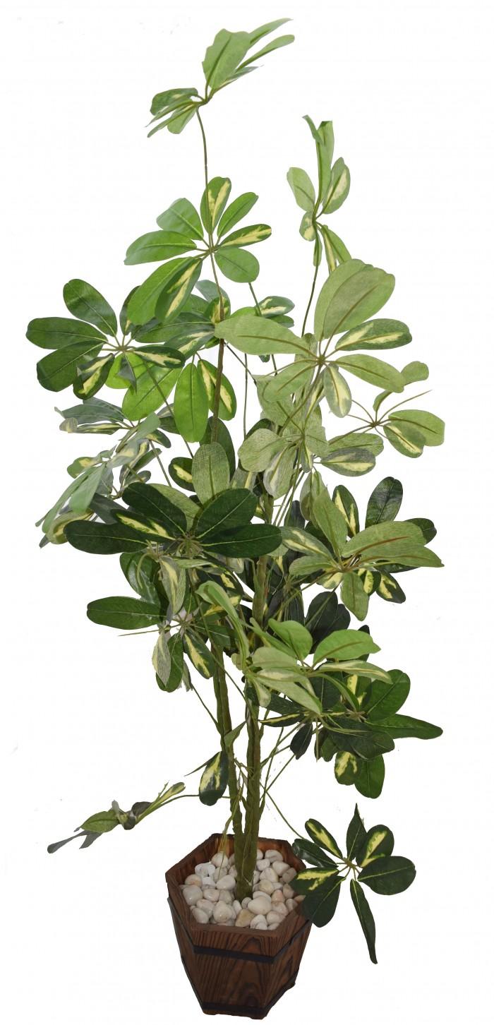 """PLANT BABY SCHEFFLERA (GREEN 48"""") WP79"""
