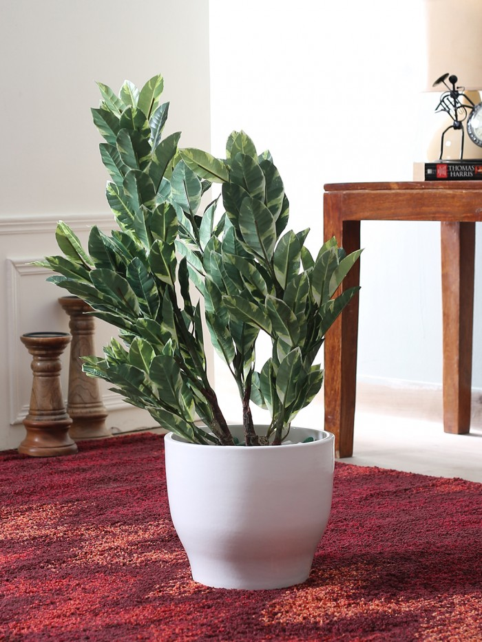60CM TALL MINI QUERCUS PLANT WITHOUT POT (WHITE AND GREEN) WP10