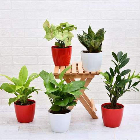 Set Of 5 Plants To Promote Happiness And Joy In Life