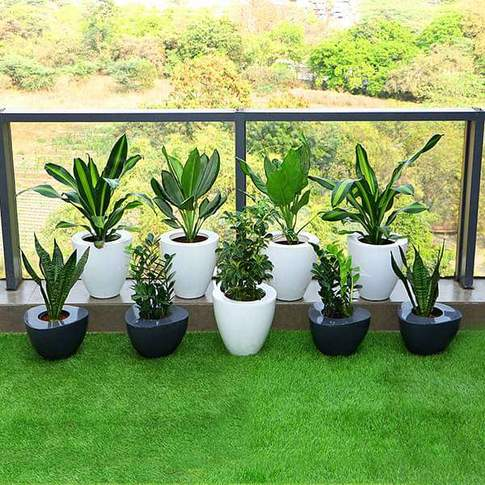 Decorate Indirect Light Receiving Balcony With Garden Combo Plants