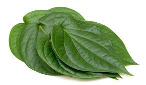 Organic Maghai Paan Leaves
