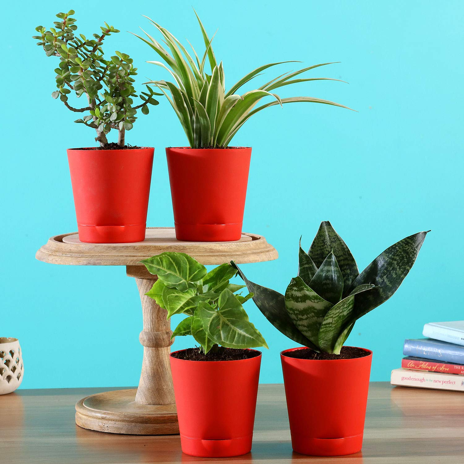 4 Air Purifying Plants In Red Self Watering Pots