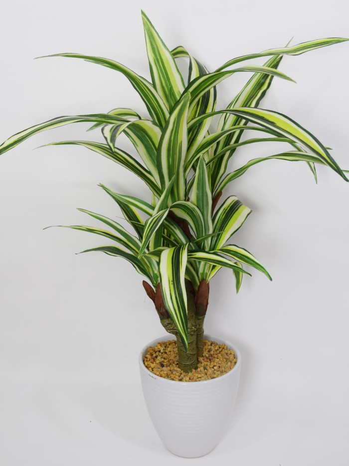ARTIFICIAL DRACAENA BONSAI PLANT IN A CERAMIC VASE FOR HOME AND OFFICE DÉCOR (71 CM, GREEN)