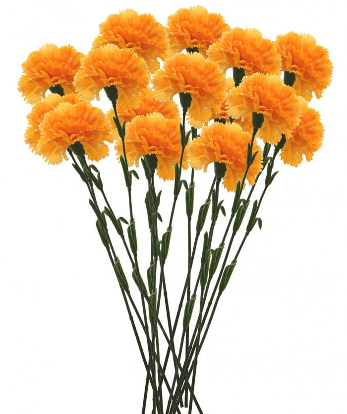 FOURWALLS ARTIFICIAL SYNTHETIC SINGLE CARNATION FLOWER STICK (45 CM TALL, SET OF 15, YELLOW) MSF23