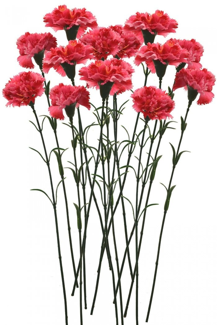 FOURWALLS ARTIFICIAL SYNTHETIC SINGLE CARNATION FLOWER STICK (45 CM TALL, SET OF 15, DARK PINK) MSF24