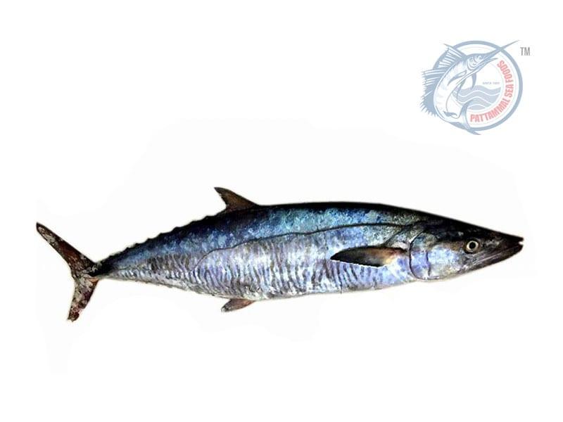 Seer Fish, Vanjaram (Slice cut)