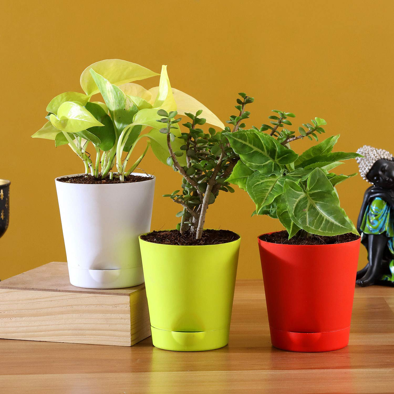 3 Plants Set With Multicoloured Self Watering Pots