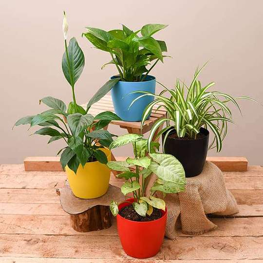 Best 4 Plants To Kill Indoor Pollution