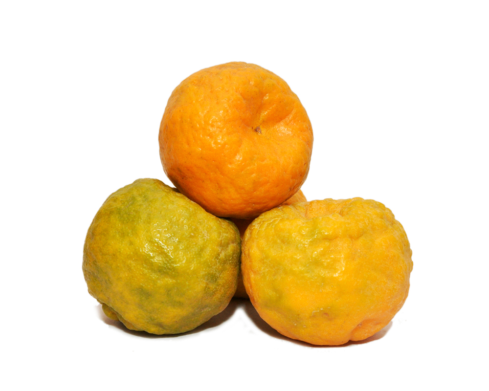 Fresh Nagpur Orange / Santra (1 KG)